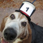 TRICK OR TREAT III, MAX THE BASSET, 10-23-15